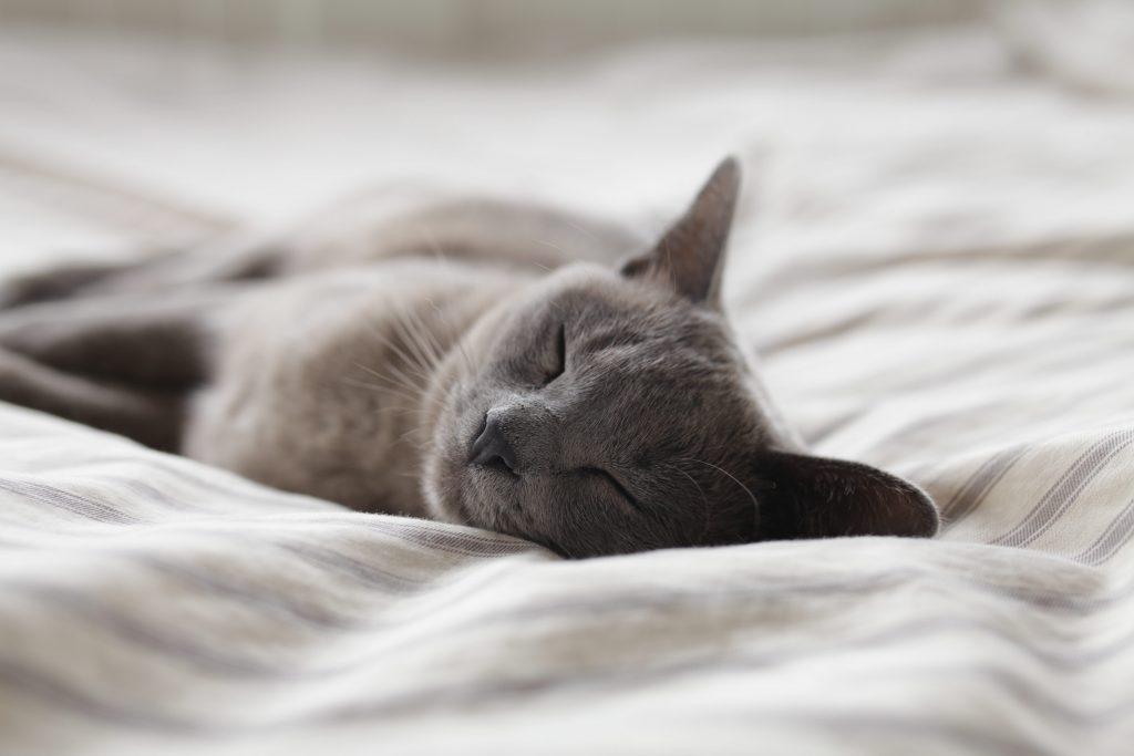 Four Truth Wellness Hypnosis Kitchener Waterloo Sleep Insomnia